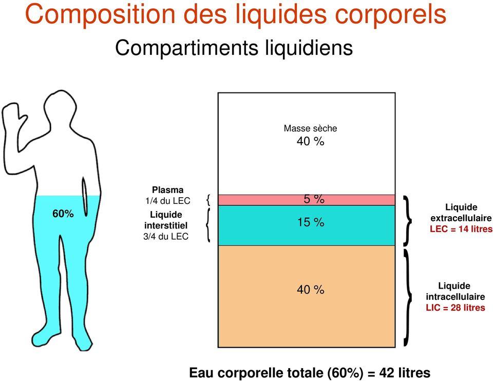 compartiment liquidiens